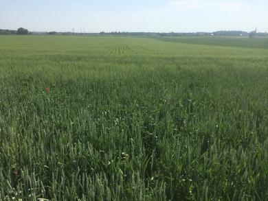 Bio-Getreide gesucht!
