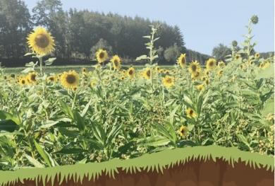 Bericht Feldtag: Optimierter Zwischenfruchtanbau in der Praxis