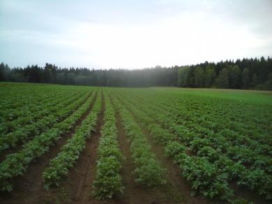 Bio Austria - Kartoffeltage 2017