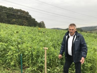 Zwischenfruchtfachtag der Bodenwasserschutzberatung 21.06.2018