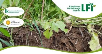 Optimierter Zwischenfruchtanbau zur Steigerung der Bodenfruchtbarkeit
